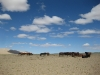 mongolie-39